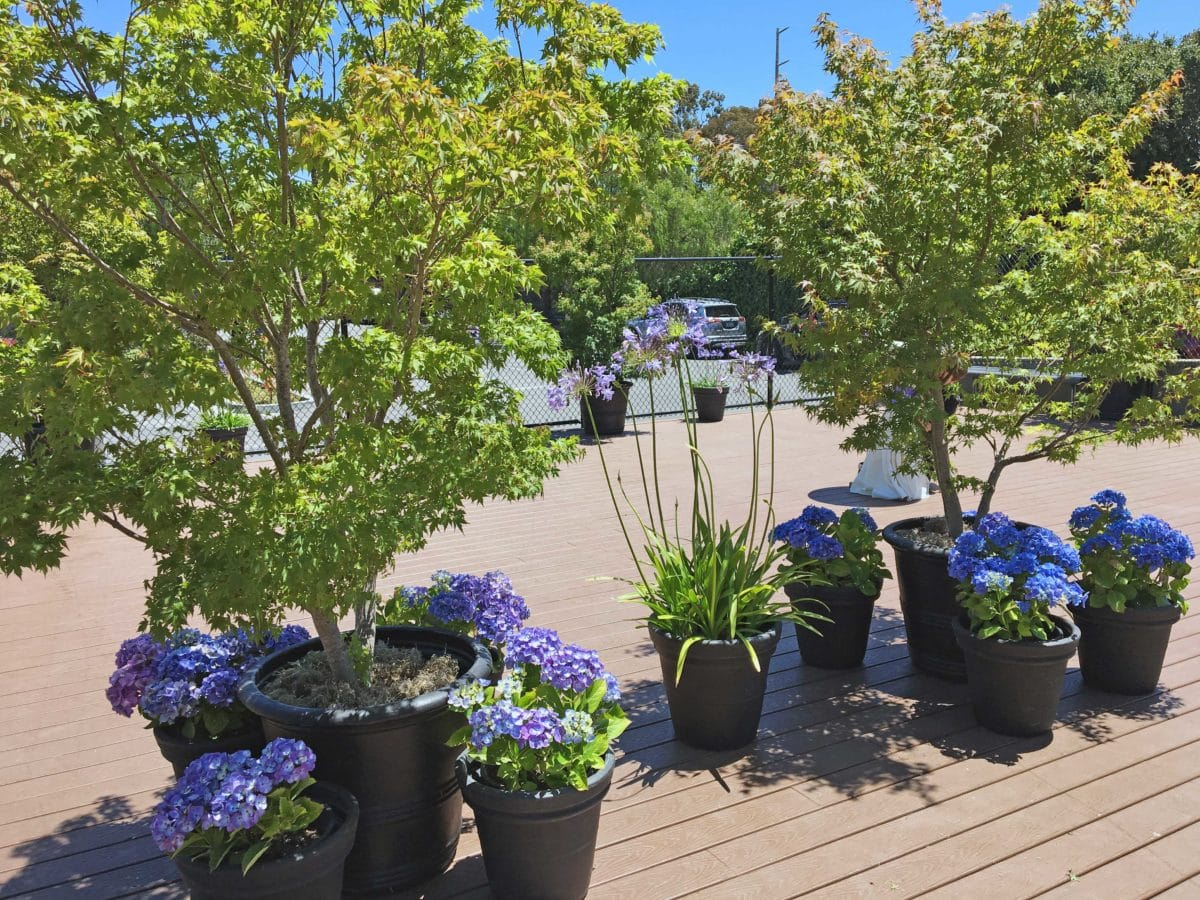 Eventscapes Plant Rental And Trade Shows 20