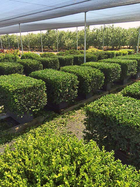 Eventscapes Plant Rental And Trade Shows 25