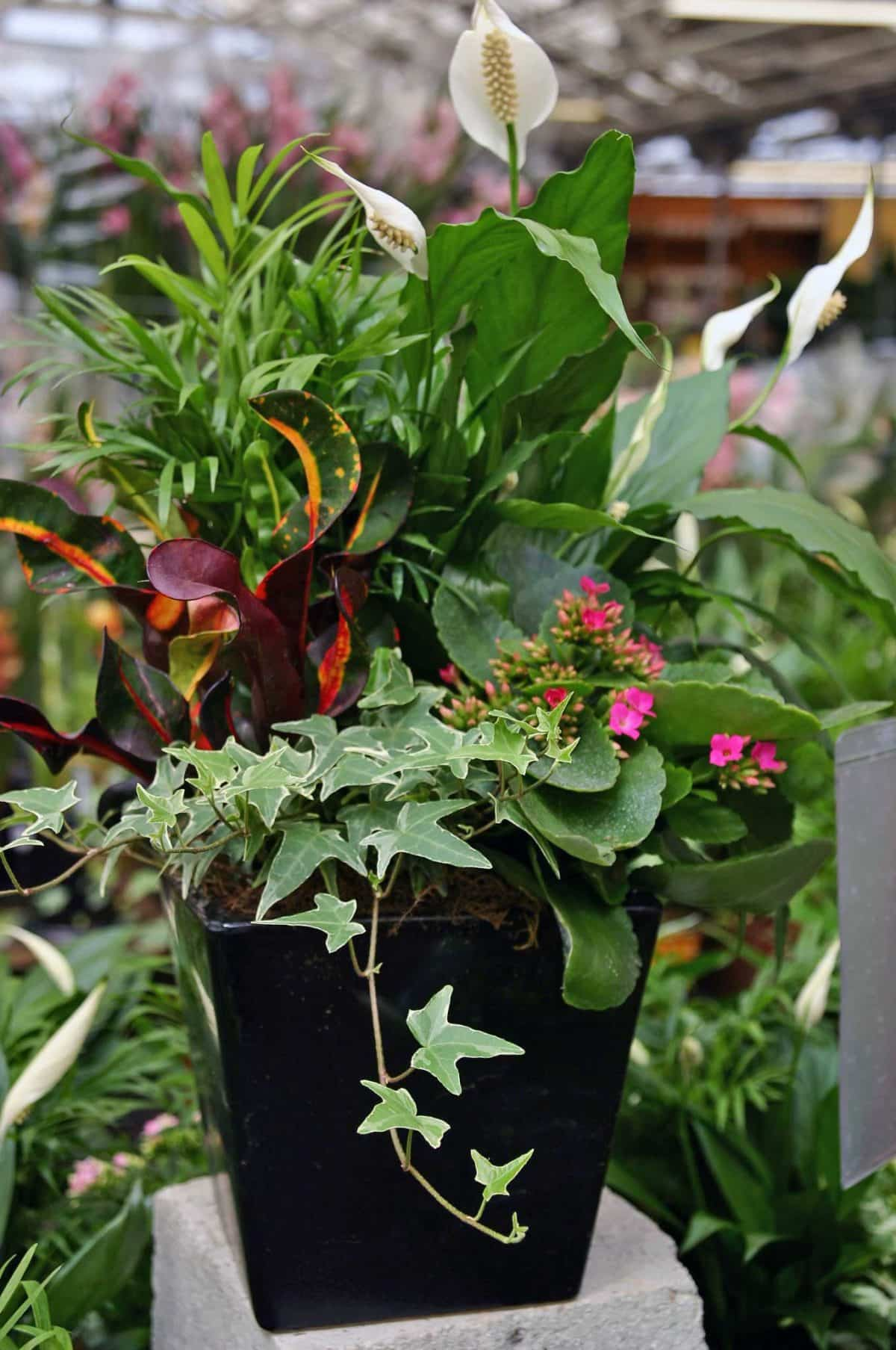 Eventscapes Plant Rental And Trade Shows 26