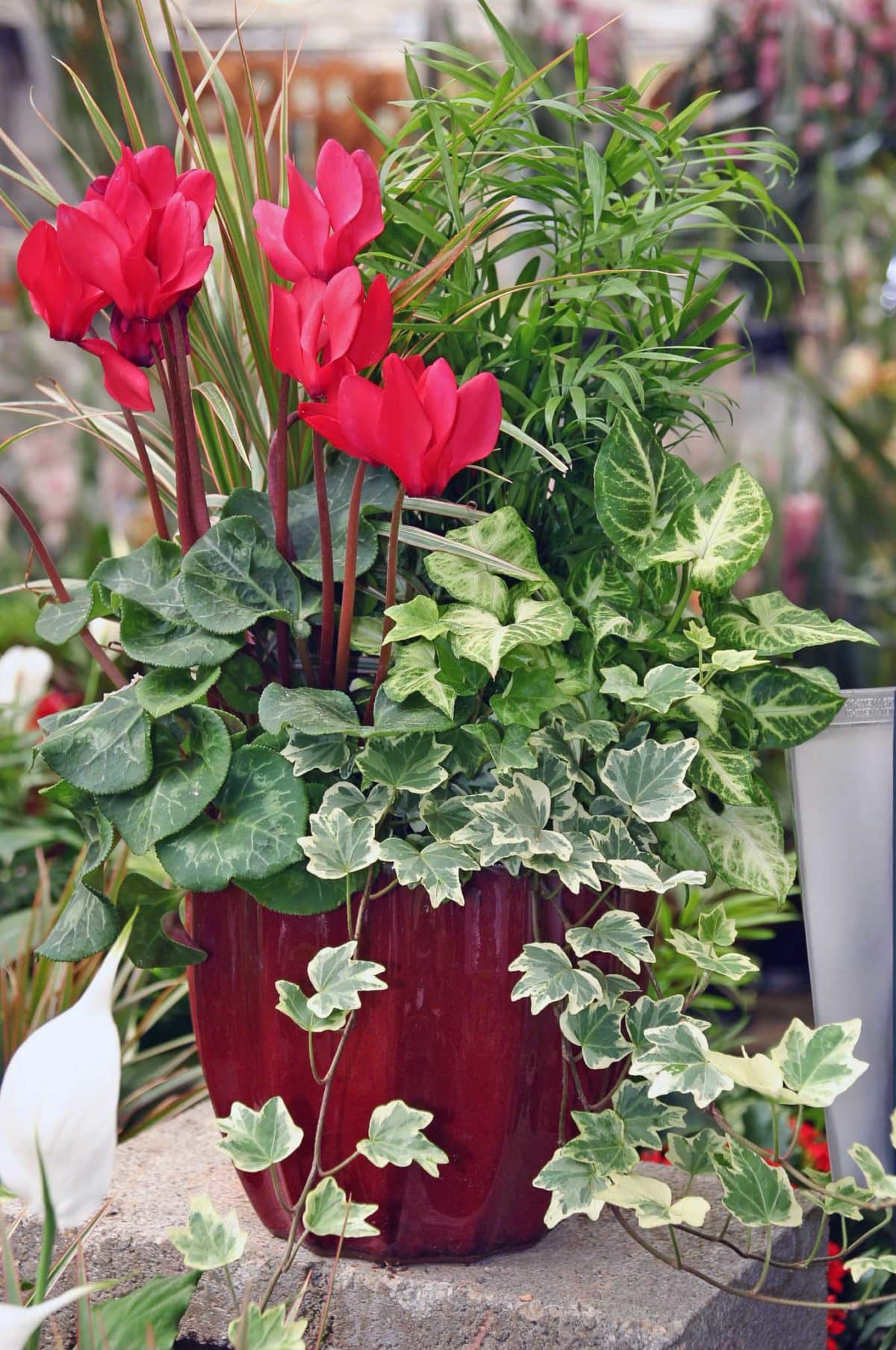 Eventscapes Plant Rental And Trade Shows 29